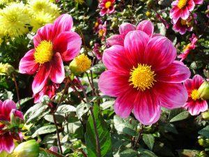 herbstblumen-19e43918-ee60-4069-9fab-4c3ad51c201c